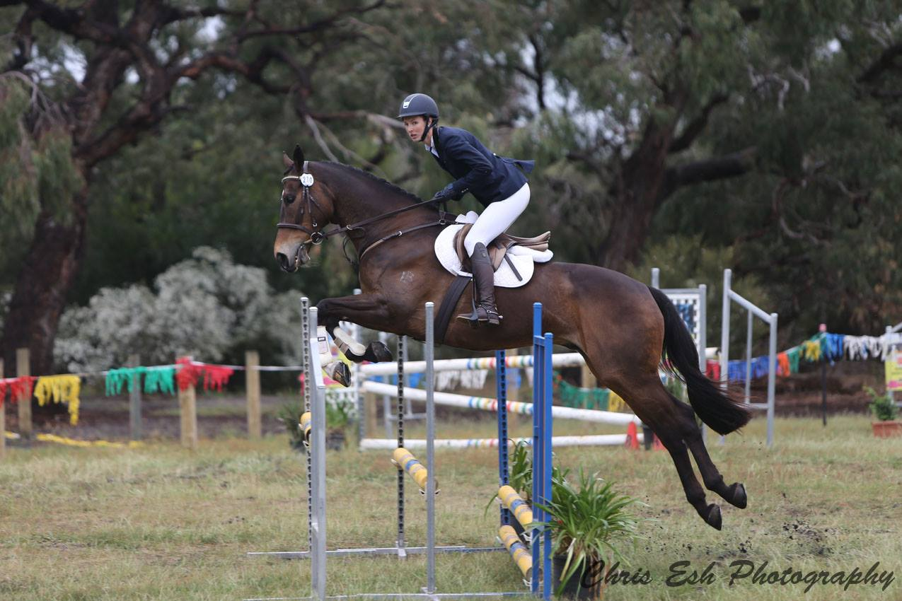 Caught In The Breeze Thoroughbred Gelding Bay Horses For Sale Vic Regional