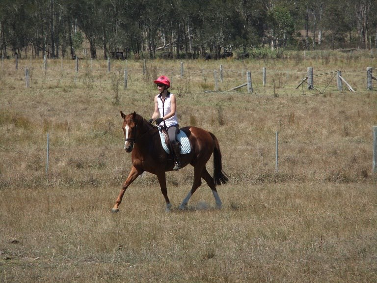 Quot Lucy Quot Show Horses Mare Chestnut Horses For Sale Nsw