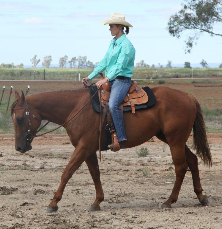 "Used Tractors For Sale >> ""Jabelle ICEE a STAR"" - Quarter Horse Gelding (Chestnut ..."